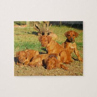 Rhodesian Ridgeback puppies puzzle