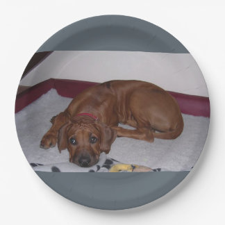Rhodesian_Ridgeback_puppy Paper Plate