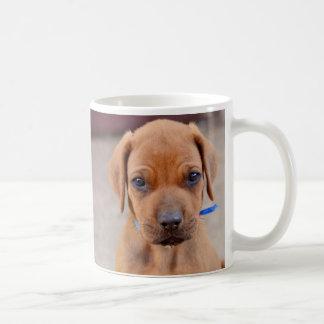Rhodesian Ridgeback puppy - portrait Coffee Mug