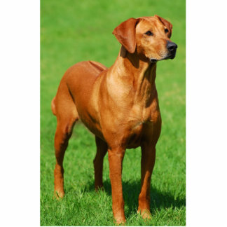 Rhodesian Ridgeback sculpture Standing Photo Sculpture