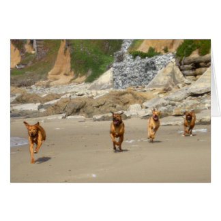 Rhodesian Ridgebacks Running Card