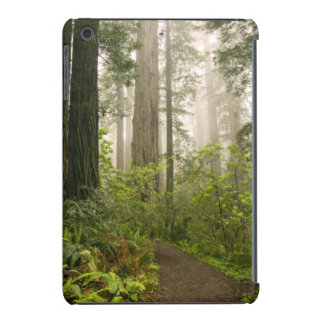 Rhododendron blooming among the Coast Redwoods / iPad Mini Retina Case