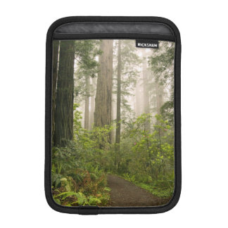 Rhododendron blooming among the Coast Redwoods / iPad Mini Sleeves