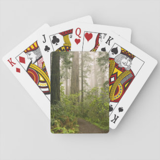 Rhododendron blooming among the Coast Redwoods / Poker Deck