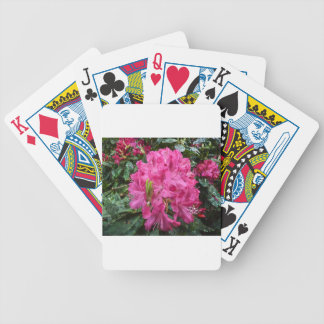 Rhododendron flower bloom with texture. poker deck