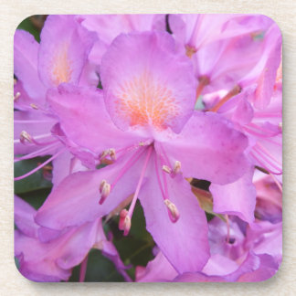 Rhododendron Flower Coasters