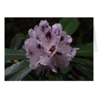 Rhododendron Flower Greetings Card