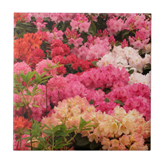 Rhododendron flowers ceramic tile