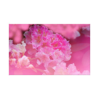 Rhododendron in pink, close-up, canvas print