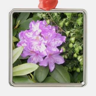 Rhododendron - Purple Flowers in Spring Silver-Colored Square Decoration