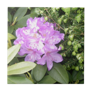 Rhododendron - Purple Flowers in Spring Small Square Tile