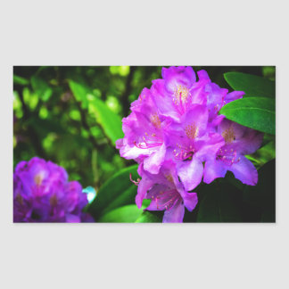 Rhododendrons in Bloom Rectangular Sticker