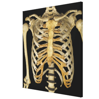 Rib Cage Stretched Canvas Print