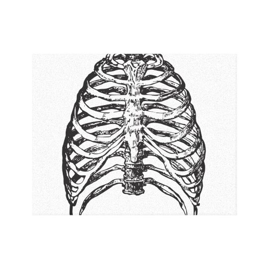 Ribs illustration - ribs art canvas print
