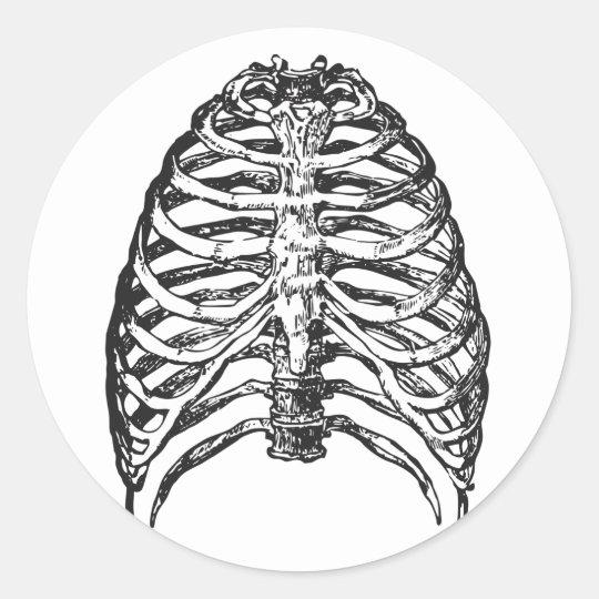 Ribs illustration - ribs art classic round sticker