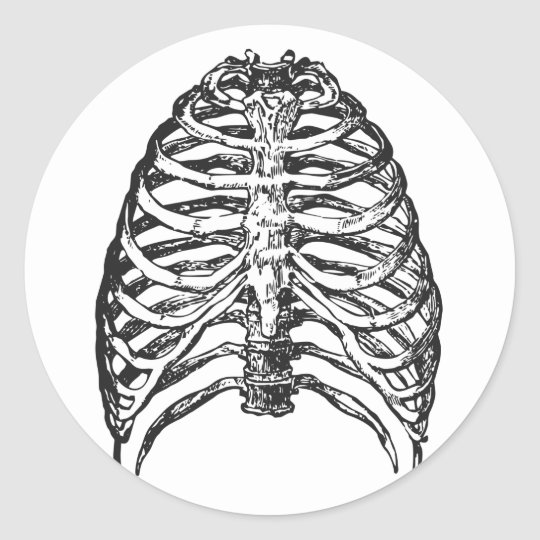 Ribs illustration - ribs art classic round sticker