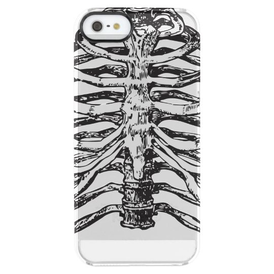 Ribs illustration - ribs art clear iPhone SE/5/5s case