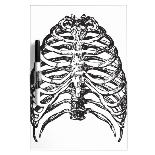 Ribs illustration - ribs art dry erase board