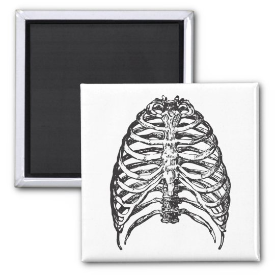 Ribs illustration - ribs art magnet