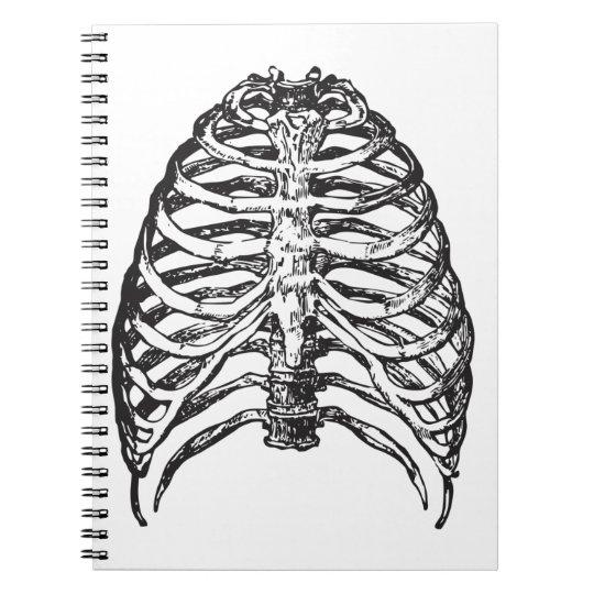 Ribs illustration - ribs art notebook