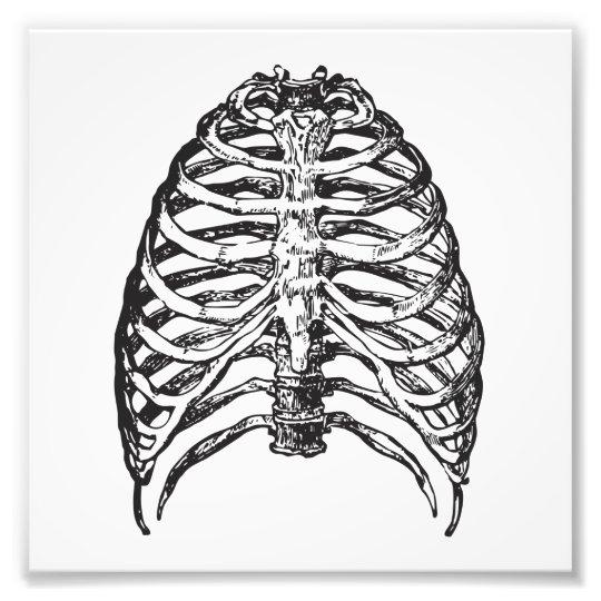 Ribs illustration - ribs art photo print
