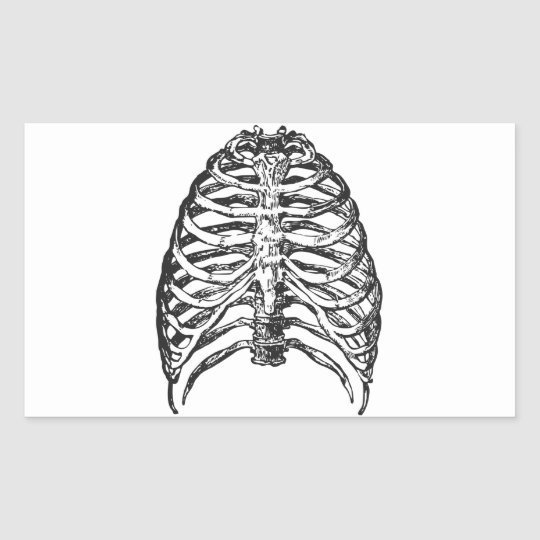 Ribs illustration - ribs art rectangular sticker