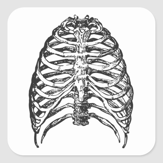 Ribs illustration - ribs art square sticker