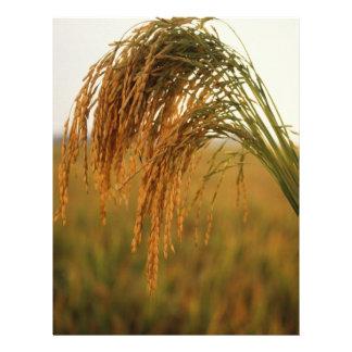 Rice 21.5 Cm X 28 Cm Flyer