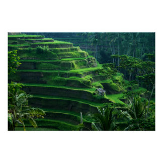 Rice Fields Bali Indonesia Poster