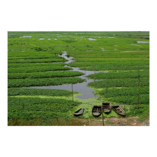 rice fields in cambodia posters
