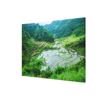 Rice terrace landscape, Philippines Canvas Print