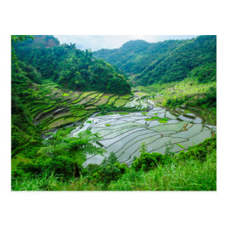 Rice terrace landscape, Philippines Postcard