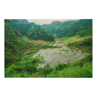 Rice terrace landscape, Philippines Wood Wall Art