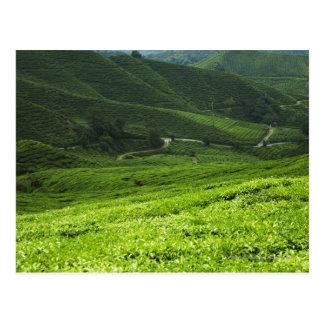 rice terraces postcard
