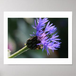 Rich Blue Purple Cornflower Bachelor's Bee Poster