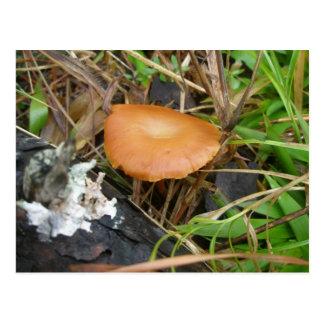 Rich Brown Mushroom OBX Postcard