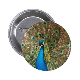 Rich Color Photo of Peacock 6 Cm Round Badge