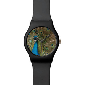 Rich Color Photo of Peacock Bird Wristwatches