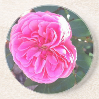 Rich Pink Rose Coaster