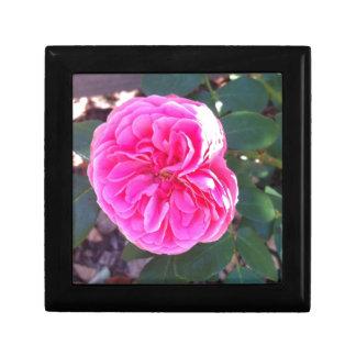 Rich Pink Rose Gift Box