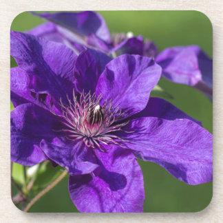 Rich Purple Clematis Blossom Macro Coaster