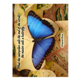 Richard Bach-The Caterpillar Postcard