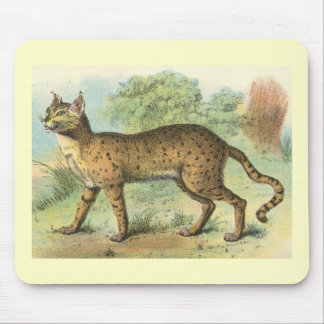Richard Lydekker - Desert Cat Mouse Pad