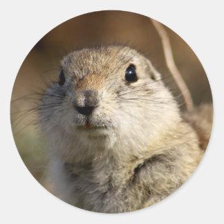 Richardsons Ground Squirrel, aka, Prairie Gopher Classic Round Sticker