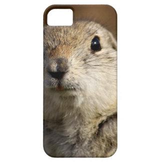 Richardsons Ground Squirrel, aka, Prairie Gopher iPhone 5 Covers