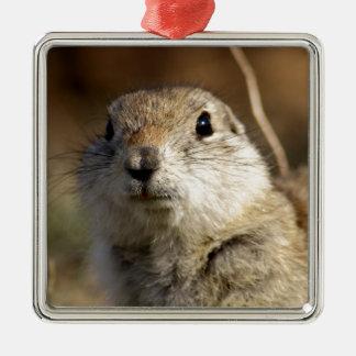 Richardsons Ground Squirrel, aka, Prairie Gopher Metal Ornament
