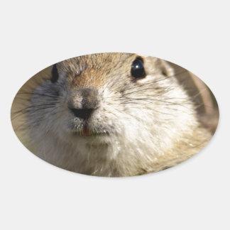 Richardsons Ground Squirrel, aka, Prairie Gopher Oval Sticker