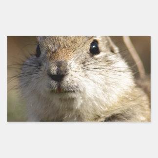 Richardsons Ground Squirrel, aka, Prairie Gopher Rectangular Sticker