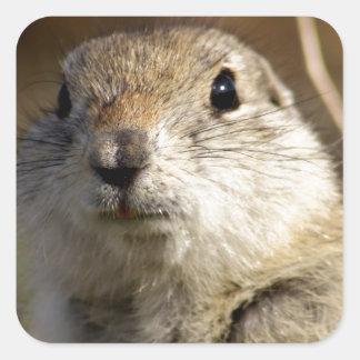 Richardsons Ground Squirrel, aka, Prairie Gopher Square Sticker