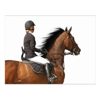 Rider & Horse Postcard